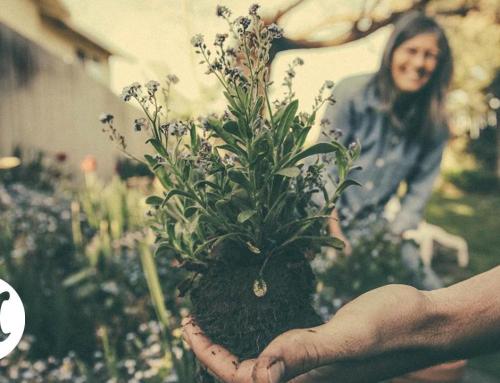 Si tus macetas están en estado crítico, llévalas al hospital para plantas.