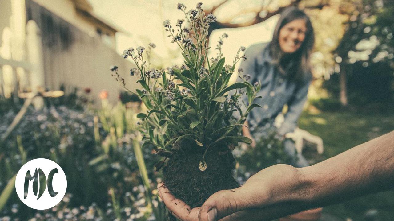 plantas, Si tus macetas están en estado crítico, llévalas al hospital para plantas.