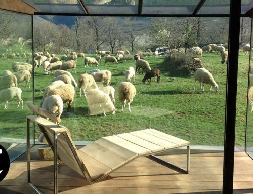 AP Gallery, exponer rodeado de ovejas.