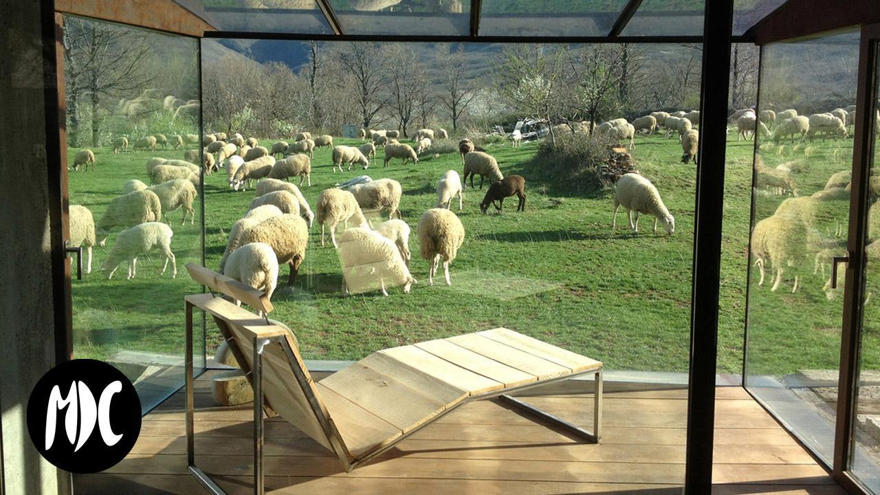 arte, AP Gallery, exponer rodeado de ovejas.