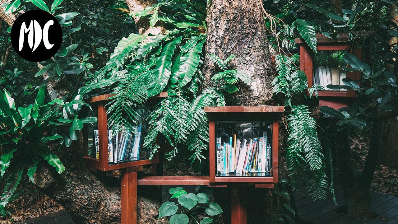 hogar, Mi casa es una selva