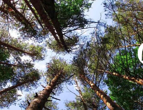 Lars Mytting. Los dieciséis árboles del Somme o el placer de reencontrarse con lo auténtico