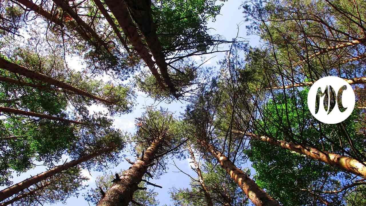 auténtico, Lars Mytting. Los dieciséis árboles del Somme o el placer de reencontrarse con lo auténtico