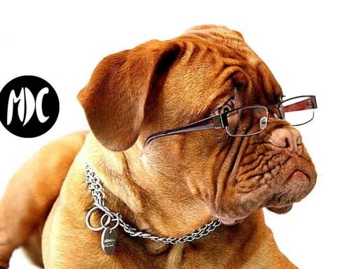 Si tu mascota sufre con la pirotecnia… Wagner puede ser la solución.