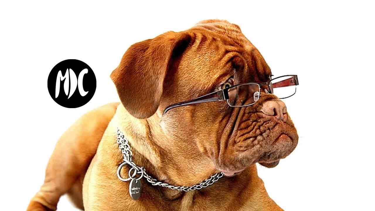mascota, Si tu mascota sufre con la pirotecnia… Wagner puede ser la solución.