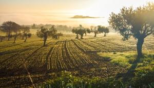 paisaje, Es lo más: Un paisaje del oeste americano ubicado en Castilla