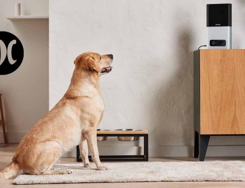 El colmo de la desantención, que tu mascota exija una videollamada