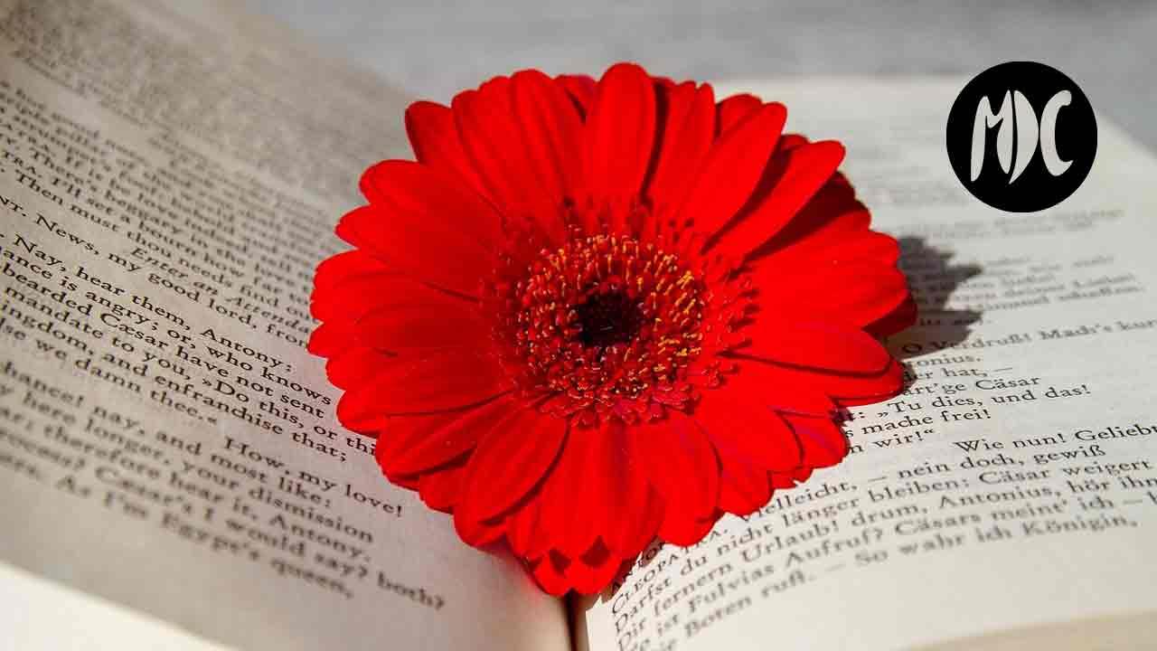 poesía, Hoy, 21 de Marzo, es el Día Mundial de la Poesía
