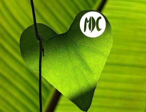 Verdolatría. Una lectura recomendada en el Día Mundial del Medio Ambiente