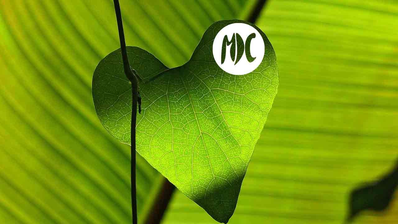 medio ambiente, Verdolatría. Una lectura recomendada en el Día Mundial del Medio Ambiente