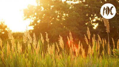 luz verano