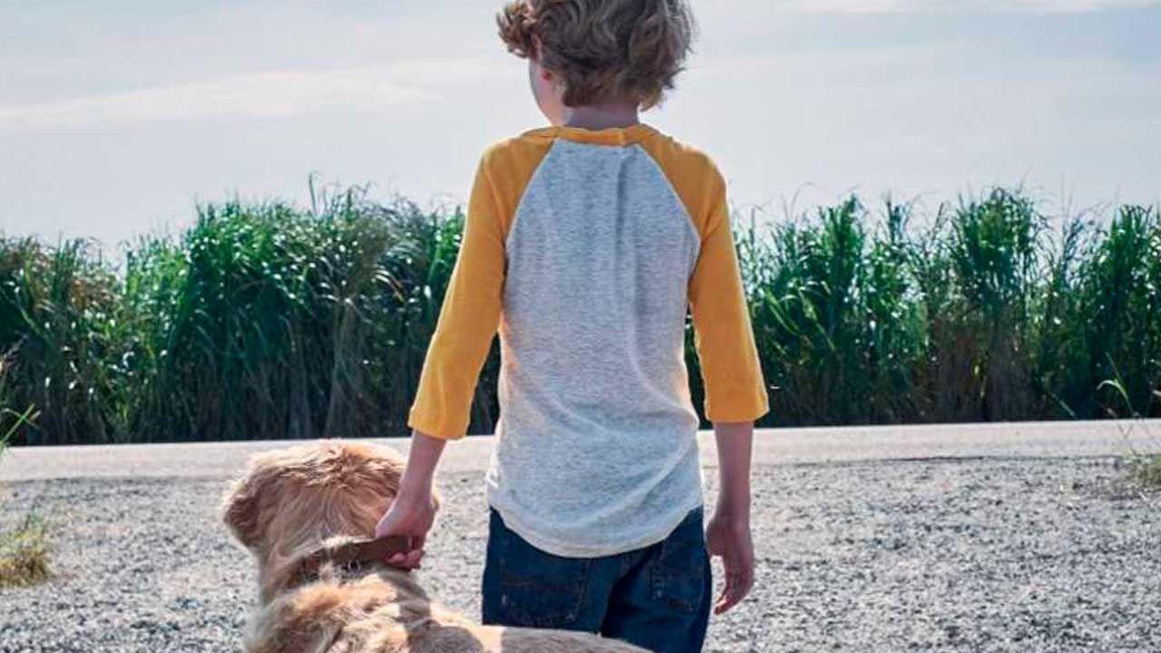 Niño sujetando a un perro en la película La hierba alta