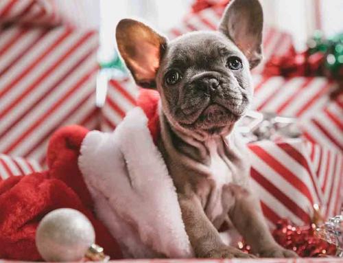 Cuatro aplicaciones para sobrellevar la Navidad