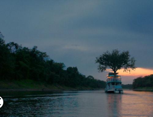 Jabotá, la historia del primer árbol refugiado del mundo