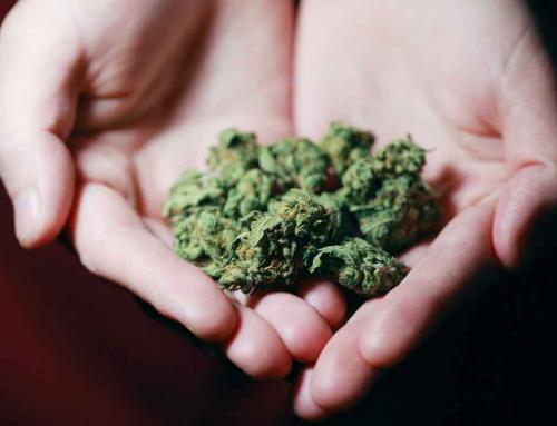 ¿Cuáles son las propiedades medicinales del cannabis?
