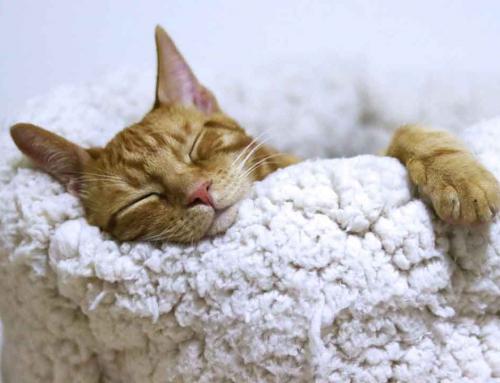 Convivir con un gato, una guía para dueños primerizos